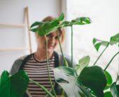 Rośliny oczyszczające powietrze, które powinnaś mieć w domu, szczególnie gdy są w nim dzieci